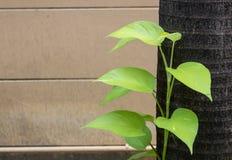 Pianta verde che coltiva tronco laterale Immagine Stock Libera da Diritti