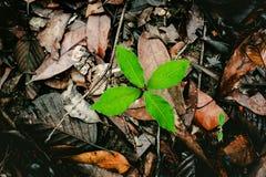 Pianta verde che cresce fra le foglie asciutte Immagine Stock Libera da Diritti