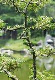 Pianta verde con la vista del lago Immagine Stock Libera da Diritti