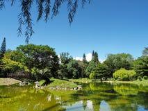 Pianta verde con la vista del lago Fotografia Stock
