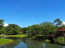 Pianta verde con la vista del lago Fotografie Stock Libere da Diritti