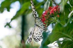 Pianta verde con le farfalle Fotografia Stock