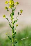 Pianta verde con un insetto su  Immagini Stock Libere da Diritti