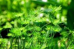 Pianta verde del fiore Fotografia Stock