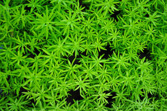 Pianta verde del fondo Fotografia Stock