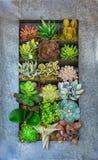 Pianta verde del succulente e del cactus Fotografia Stock