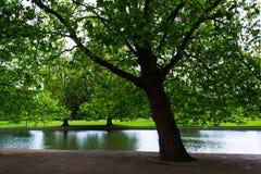 Pianta verde dell'albero e una vista di Ouse del fiume Immagini Stock Libere da Diritti