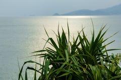 Pianta verde dell'aloe con vista sul mare Immagini Stock Libere da Diritti