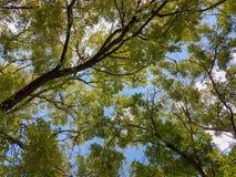 Pianta verde della natura del paesaggio del fogliame degli alberi forestali immagini stock libere da diritti
