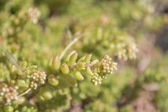 Pianta verde dettagliata di macro strana fotografia stock