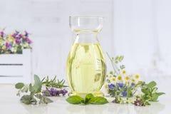 Pianta verde di aromaterapia e botle freschi dei fiori di olio essenziale Immagini Stock