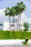 Pianta verde di costruzione della palma Fotografia Stock Libera da Diritti