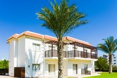 Pianta verde di costruzione della palma Immagine Stock Libera da Diritti