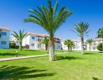 Pianta verde di costruzione della palma Fotografie Stock