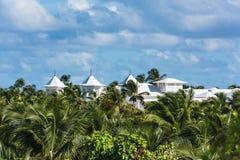 Pianta verde di costruzione della palma Fotografia Stock