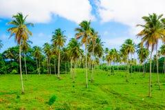Pianta verde di costruzione della palma Fotografie Stock Libere da Diritti