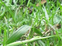 Pianta verde e fiori fotografia stock