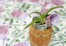 Pianta verde e soldi in barilotto Immagini Stock
