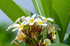 Pianta verde fertile luminosa selvatica immagini stock libere da diritti