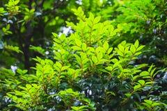 Pianta verde fresca Immagini Stock Libere da Diritti