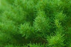Pianta verde Le foglie verdi modellano il modello naturale Immagine Stock Libera da Diritti