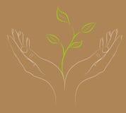 Pianta verde in mani femminili. royalty illustrazione gratis