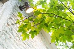Pianta verde nella casa per nell'aria fresca ed il raffreddamento della casa fotografia stock