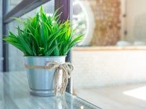 Pianta verde nella decorazione del vaso dello zinco sulla tavola di vetro immagini stock libere da diritti