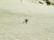 Pianta verde nella sabbia fotografia stock libera da diritti