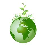 Pianta verde su terra Fotografie Stock Libere da Diritti