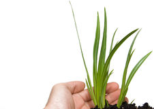 Pianta verde su una priorità bassa bianca Fotografie Stock
