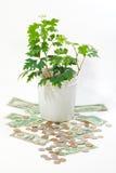 Pianta verde su valuta Immagini Stock Libere da Diritti