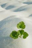 Pianta verde sul campo Fotografia Stock