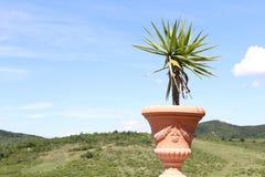 Pianta verde in un vaso con le montagne Immagini Stock