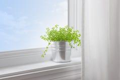 Pianta verde in una casa moderna Fotografia Stock