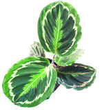 Pianta verde, vista da sopra Fotografia Stock Libera da Diritti