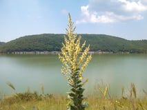 Pianta vicino al lago Fotografia Stock Libera da Diritti