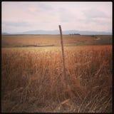 piantagione Fotografie Stock