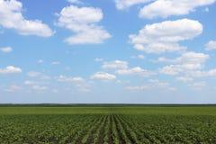 piantagione Fotografia Stock Libera da Diritti
