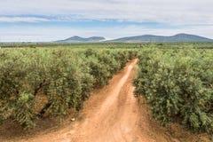 Piantagione degli alberi da frutto Fotografia Stock
