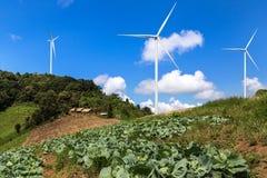 Piantagione del cavolo con i generatori eolici che generano il fondo di elettricità Fotografia Stock