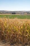 Piantagione del cereale e fabbrica dell'impianto di lavorazione Fotografie Stock