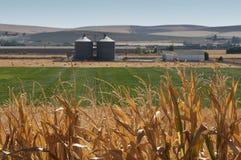 Piantagione del cereale e fabbrica dell'impianto di lavorazione Immagine Stock Libera da Diritti