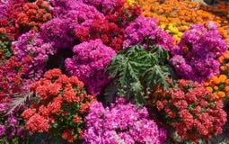 Piantagione del fiore nel Vietnam del sud immagini stock