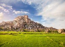 Piantagione del riso in Hampi Immagine Stock