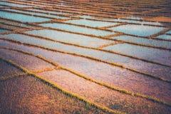 Piantagione del riso nel Nepal Fotografia Stock