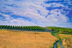 Piantagione del vino in Macedonia fotografie stock libere da diritti