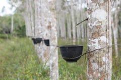 Piantagione dell'albero di gomma in Tailandia Fotografia Stock Libera da Diritti