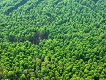 Piantagione dell'eucalyptus nel Brasile - agricoltura della carta della cellulosa - vista del fuco del birdseye immagine stock