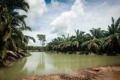 Piantagione dell'olio di palma Fotografia Stock Libera da Diritti